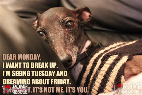 Monday Dog Meme - greyhound dog memes funny