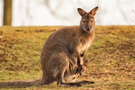 imagenes animales viviparos 20 ejemplos de animales viv 237 paros