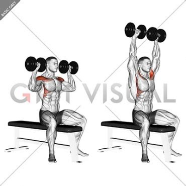 seated dumbbell bench press dumbbell bench seated press