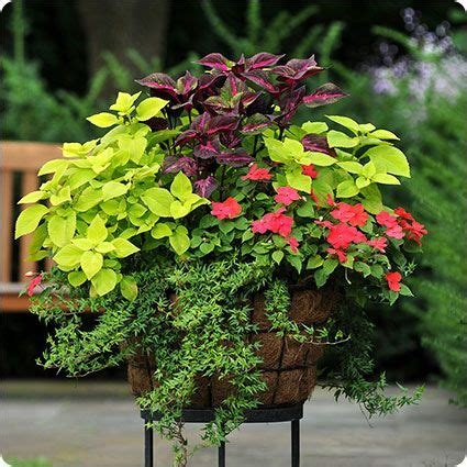 Plant Combination Ideas For Container Gardens Shade Container Garden Landscaping Inspiration Pinterest Gardens Container Gardening And
