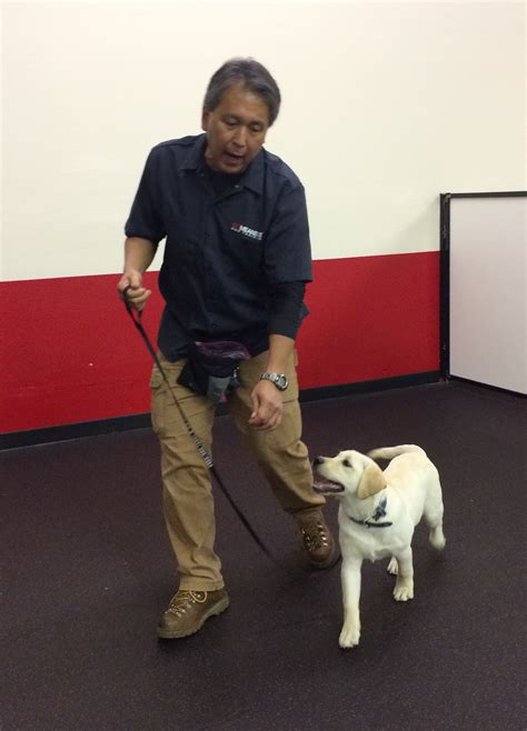 how to to walk on leash without pulling playful dogs portland