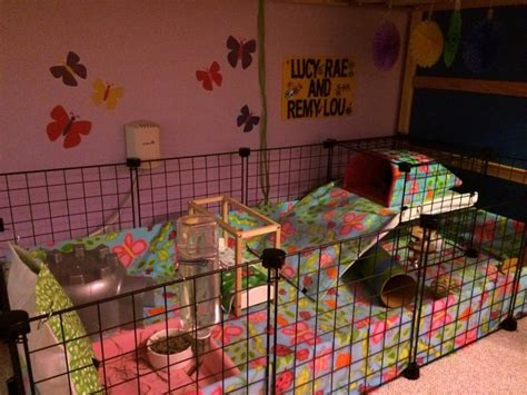 guinea pig bedding ideas 17 best images about hedgehog cage on pinterest cavy
