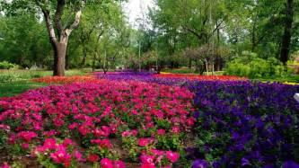 stunning flower landscape wallpaper 1366x768 7561