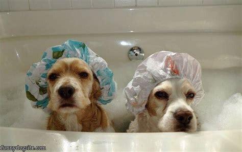 2 dogs in a bathtub bath time dogs funnydogsite com