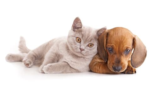 baby cats and dogs cats dogs dachshund animals baby cat kitten wallpaper 5139x3213 620707 wallpaperup