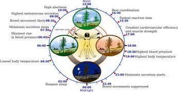 chronobiology wikipedia