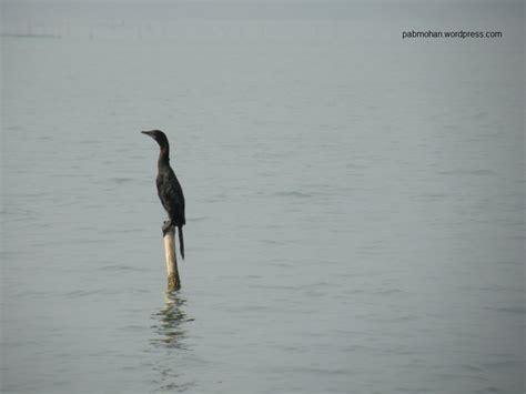 bookmyshow shimoga a short trip to chilika lake 171 pab blog