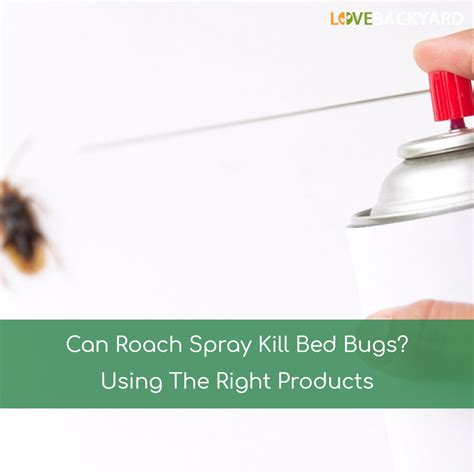 where can i buy bed bug powder where can i buy bed bug powder what can i buy to kill bed bugs bedding sets