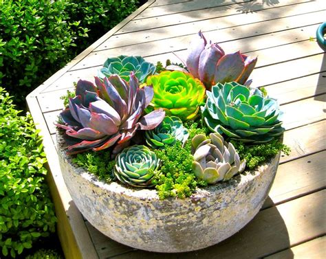 vaso per piante grasse composizioni piante grasse piante grasse