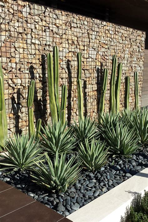 outdoor cactus garden ideas     landscape