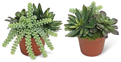 artificial succulents mall silks