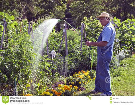 watering garden plants royalty  stock photography