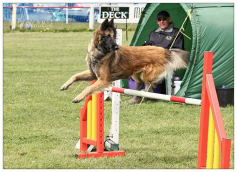 puppy agility my suffers from handler impairment the analogy to whats wrong with your