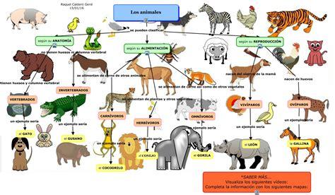 imagenes animales carnivoros herviboros omnivoros raquel caldero cmap