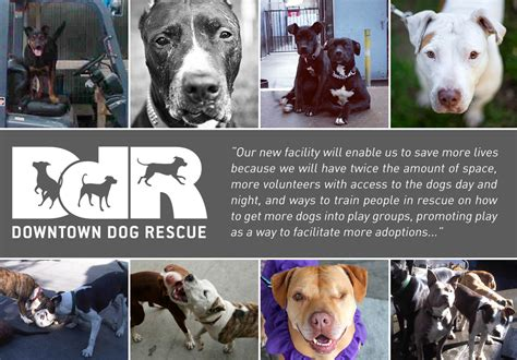 downtown dogs a new chapter for downtown rescue downtown rescue