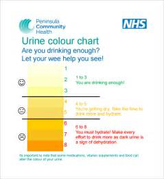 what color is healthy urine healthy urine color chart pictures to pin on