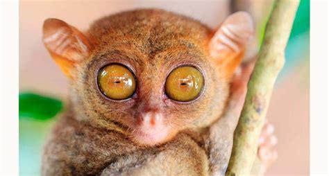 imagenes de ojos grandes y feos 191 cu 225 les animales tienen los ojos m 225 s grandes