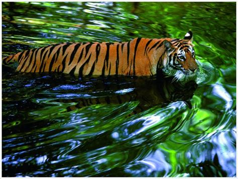 Natgeo World 4 national geographic most beautiful photos