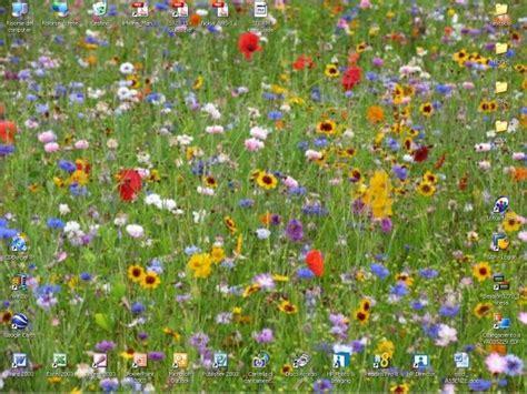 trucco prato fiorito il mio desktop 134 galleria repubblica it