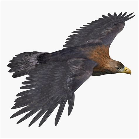 Kaos 3d Eagle Fly golden eagle 3d model