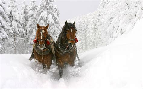 christmas horses wallpaper  computer