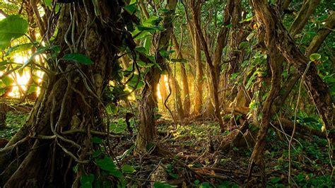 Tropical Jungle tropical jungle hd wallpaper wallpaper studio 10 tens