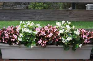 flowers for window boxes in partial shade best plants for shade container gardening