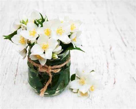 fiori di gelsomino fiori di gelsomino per un matrimonio d agosto bon bon flower