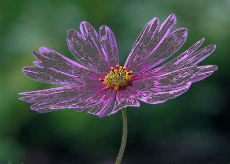 della fiore la leggenda fiore di pietra della montagna di malachite