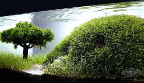 aquascape tree aquarium hobbit house aquarium pinterest trees a