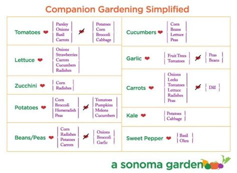 companion planting chart living herbs new zealand companion planting simplified day 12 of 30 days to a