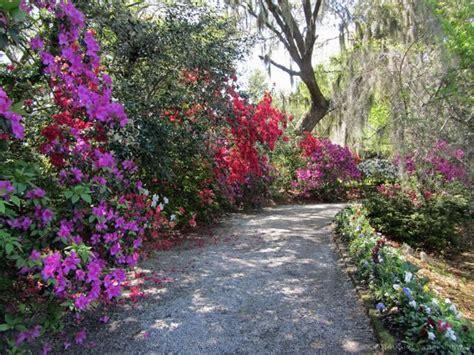 01 Azelia Syari views of magnolia plantation and gardens in the charleston sc highway 17