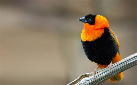 beautiful small birds wallpapers entertainment only cute small birds wallpapers entertainment only