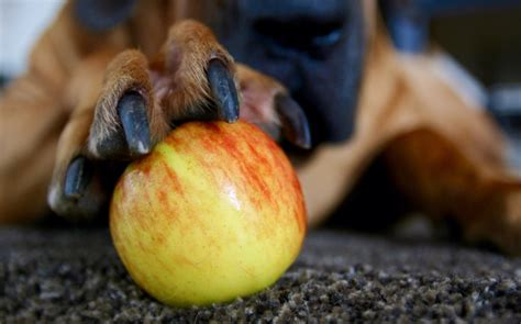 fruit upsets my stomach ten healthy fruits that are suitable for dogs pets4homes
