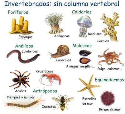 imagenes de animales vertebrados e invertebrados introducci 211 n animales vertebrados e invertebrados