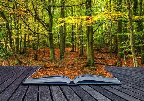 libro el bosque biblioideas libros amigos de los bosques