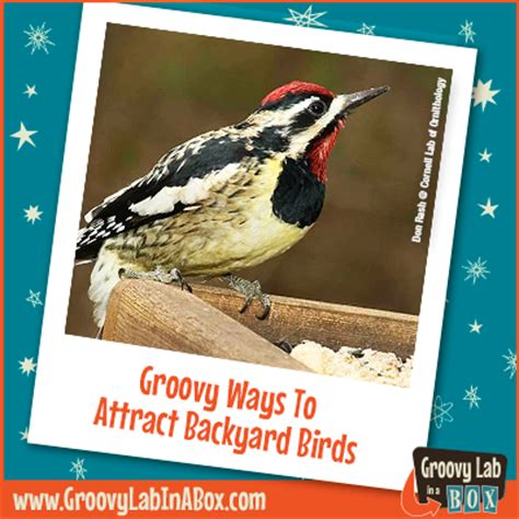 how to attract birds to your backyard groovy ways to attract backyard birds groovy lab in a box