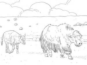 ausmalbild yak mutter mit kalb kostenlos