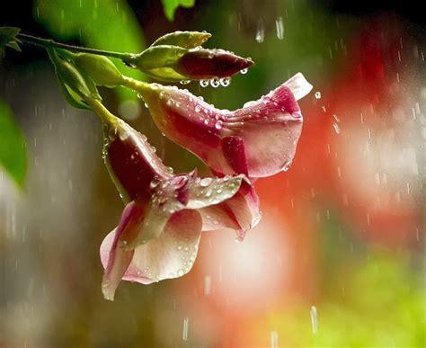 imagenes grandes flores hermosas banco de im 225 genes 60 fotograf 237 as de las flores m 225 s