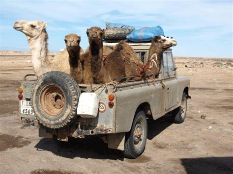 land rover desert notice placement of the camel trophy trucks 4x4