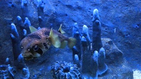 Tiket Underwater World Pattaya Thailand Dewasa underwater world tarikan pelancong ke langkawi tempat menarik