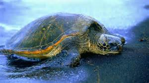 animal, turtles, turtle cool picture, turtle, animal photos, pictures