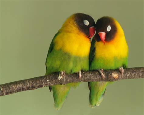 fourth eye rare birds