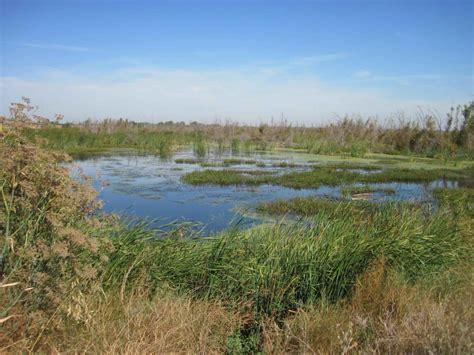 file beautiful marsh wetland landscape jpg wikimedia commons