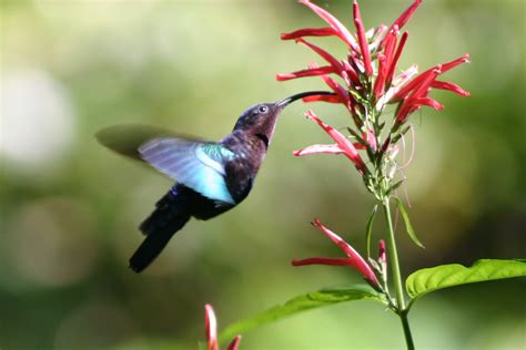 ten amazing facts about hummingbirds video science vibe