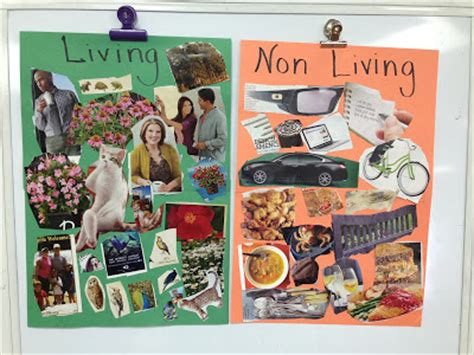 5 things to consider before living together collage center kindergarten hopefuls all about living things