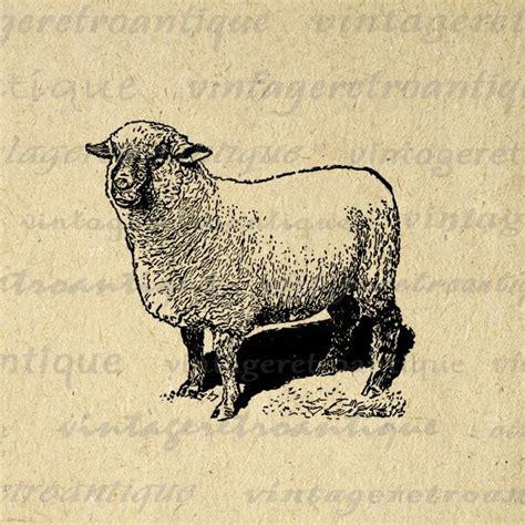 vintage printable animal digital printable antique sheep image farm animal download