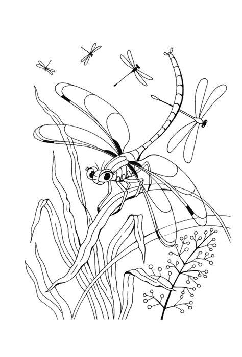 ausmalbilder f 252 r kinder libelle