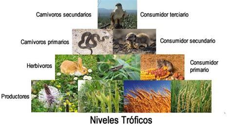 cadena alimenticia quienes son los productores niveles tr 243 ficos