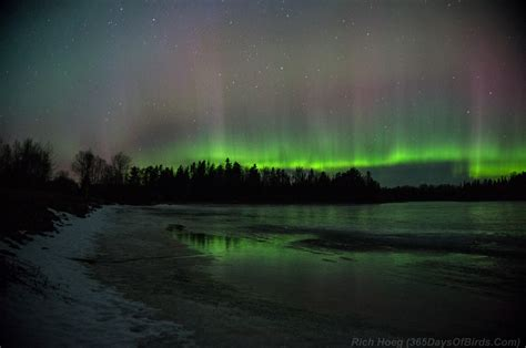 Northern Lights Mn by Background 365 Days Of Birds